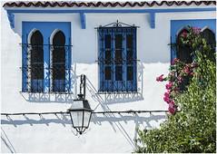 0493- VENTANAS CON FAROLA - XAUEN - MARRUECOS  - (--MARCO POLO--) Tags: calles ciudades exotismo marruecos ventanas
