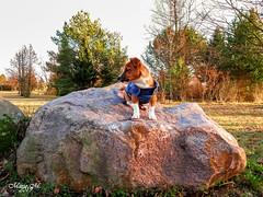 Endlich schönes Wetter (mariomüller1) Tags: hunde hund jackrussel dog tier freund