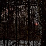 2019-01-16   -   Yes that is the Sun setting, viewung from the Forest   - thumbnail