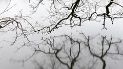 Spiegelungen auf Eisfläche (Sanseira) Tags: spiegelungen äste baum zweige eisfläche