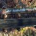 Basingstoke Canal Deepcut 17 January 2019 004