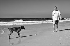 The ball (michael.mu) Tags: gsp telaviv beach dog leica m240 50mm leicaaposummicronm50mmf2 ball blackandwhite streetphotography bw monochrome israel