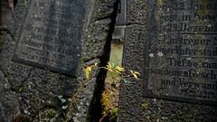 Sie ruhet in Frieden, doch mir bleibt Schmerz und Klage. (nordelch61) Tags: worms friedhof jüdisch heiliger sand alt 2500 grabsteine 11jahrhundert unescoweltkulturerbe