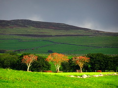 Glasfryn, Wales, October 2016 Explored (Janpram) Tags: glasfryn wales walkinglandscape autumn autumncolours clouds welshcountryside welshlandscape