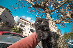 Jewish cat (MeirArt) Tags: cat cats jerusalem israel kitty pet pets sky blue