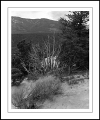 Dead Junipers (rspohl17) Tags: deadtrees britishcolumbia hoodoomountain farimont landscape largeformat 4x5 film analog