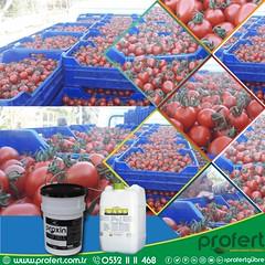 profert-domates--[Kurtarılan] (Profert Gübre) Tags: domates dolmabiber sebze seracılık sebzecilik sera seed sel season sulama süsbitkisi ceri çeri kokteyl
