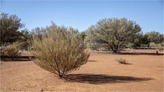 Red Centre@Uluru (:: Blende 22 ::) Tags: tree baum australia australien nothernterritory outback olgas katatjuta uluru ayersrock basewalk redrocks redcentre rocks bluesky canoneos5dmarkiv ef2470mmf28liiusm