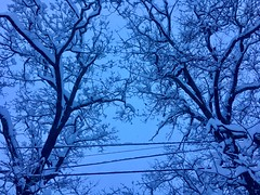 Winter Wonderland! (Polterguy40) Tags: winterwonderland winter trees tree snowing snow massachusetts medford random