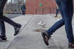 Anonymously passing (Rense Haveman) Tags: campuswageningen fsulens lightroom mir1v pentaxk5 pentaxforumscom rensehaveman singleinmarch2019 sovietlens handheld manualfocus street streetphotography shoes trousers legs wall stairs pigeon