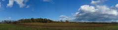 Panorama im Sturm (KaAuenwasser) Tags: panorama landschaft natur himmel blau wald wiese baum bäume feld acker land platz ort kiefern sturm wind iffezheim landwirtschaft weg feldweg gras sträucher wetter licht wolken regenwolken 2019 ilce7rm3 sony