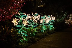 Bellingrath Magic Christmas in Lights (ciscoaguilar) Tags: bellingrath lights christmas alabama theodore