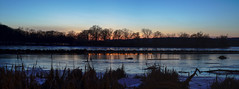Cootes Paradise (AncasterZ) Tags: nightshot wild cootesparadise panorama pano