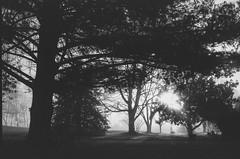 ethereal (RubyT (I come here for cameraderie!)) Tags: jchstreetpan400 ricohff1 film analog landscape sunburst fog черноеибелое bw nb bn noiretblanc blancoynegro schwarzweiss blackandwhite mono monocromo monochrome