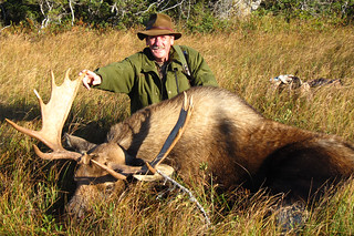 Newfoundland Caribou Hunt, Moose & Bear Hunting 53