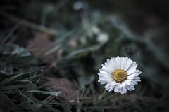 Small flower ... (Julie Greg) Tags: flower grass park colours canon canon77d nature nautre