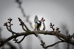 Vogel (bewölkt) (Tommes80) Tags: sonyalpha7iii vogel vögel natur wokel vollformat teleobjektiv