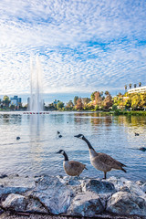 Two Canadian Geese by Echo Park Lake (SCSQ4) Tags: california donutstreetmeet echopark echoparklake losangeles morning
