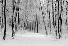 winter graphics 3 (Rambynas) Tags: lithuania lietuva forest wood winter snow tree blackwhite bw