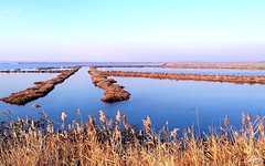 Guardo e mi rilasso! (erman_53fotoclik) Tags: paesaggio panorama canne pennacchi riva acqua cielo pace valli rosolina deltadelpo parcodeldelta erman53fotoclik samsung smj530f