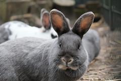 Stadsboerderij de Hout (Michellos89) Tags: hout alkmaar rabbit bunny konijn boerderij pettingzoo kinderboerderij
