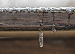 Welcome To March (glenda.suebee) Tags: ice marchmadness ohio sleet glendaborchelt ohiofoothills macro explore