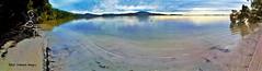 Wallis Lake Panorama from The Green Cathedral, Tiona, near Pacific Palms, NSW (Black Diamond Images) Tags: panorama msicepanorama msice msicestitch wallislake tiona greencathedral bootibootinationalpark melaleucaquinquenervia broadleavedpaperbark midnorthcoast nsw australia outdoor greatlakesnsw barringtoncoast