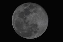 Super Moon 2 19 19 #27 (Az Skies Photography) Tags: super moon supermoon snow snowmoon supersnowmoon night february 19 2019 february192019 21919 2192019 canon eos 80d canoneos80d eos80d canon80d rio rico arizona az riorico rioricoaz sky skyscape skyline arizonasky arizonaskyscape arizonaskyline