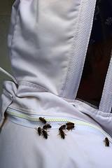 DSC_9747-61 (jjldickinson) Tags: 107d3300 nikon1855mmf3556gvriiafsdxnikkor promaster52mmdigitalhdprotectionfilter longbeach bixbyknolls longbeachbeekeepers outreach class beeprepared insect bee honeybee apismellifera jenniferduke