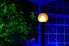 Light colors (JB Fotofan) Tags: 2018 fz1000 lumix frankfurt palmengarten winterlichter