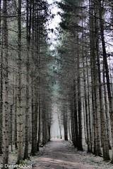 Der Weg ins Licht