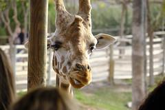 _DSF3904 Terra natura (Pascual Mateo) Tags: tierra natura xt3 fujifilm fujinon 50230 fauna animal naturaleza