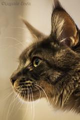 Gatto Poeta / Poet cat (Eugenio GV Costa) Tags: gatto cat gatti cats animal animali domestici