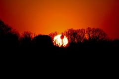 Sunset (Péter Vida) Tags: natural wesen scenery panorama sunset sonnenuntertag wood baum woods wald watertower wasserturm sun sonne springtime vorfrühling természet tájkép naplemente fa erdő víztorony nap tavasz photo photography canon eos100d