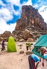 _FOU9617.jpg (Murray Foubister) Tags: 2018 gadventures spring mountainsm flora travel treking africa tanazania
