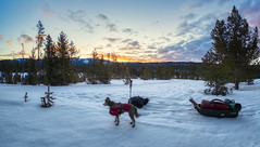 Departing at Dawn (Musgrove and the Pumi) Tags: sawtoothnationalforest idaho id sawtoothnationalrecreationarea woodythedog pumi hungarianpumidog hungarianpumibreed ruffweardogcoat ruffweardogbackpack jetsled pulk backpackingwithsled snow dawn sunrise clouds sky landscape mountains trees woods