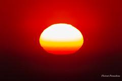 soleil coloré (Florent Péraudeau) Tags: soleil coloré arcachon nouvelle aquitaine canon eos 1 d mark mk iv 4 1d 24105 24 105 l is ums f4 f series sigma 60600 60 600 s sport florent péraudeau flox papa fp tls