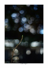 2019/3/9 - 3/21 photo by shin ikegami. - Lomography New Jupiter 3+ 1.5/50 L39/M (shin ikegami) Tags: sony ilce7m2 sonyilce7m2 a7ii 50mm lomography lomoartlens newjupiter3 tokyo sonycamera photo photographer 単焦点 iso800 ndfilter light shadow 自然 nature 玉ボケ bokeh depthoffield naturephotography art photography japan earth asia