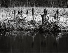 At the river (Geir Bakken) Tags: linhofcolor linhof rodenstock apo ronar landscape largeformat 4x5 longexposure water reflection blackandwhite bw film filmisnotdead filmphotography filmcamera ilovefilm harman directpositivepaper papernegative analog analogue analogphotography vintagecamera norway