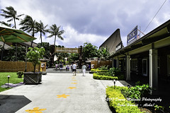 OAHU-HAWAII_1D50987-01 (Donna Molinari Photography) Tags: sanjose ca usa