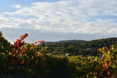 Els Nou Jornals (esta_ahi) Tags: santmartísarroca vinya viña viñedo vineyard vitisvinifera penedès barcelona españa spain испания cel cielo sky núvols nubes clouds
