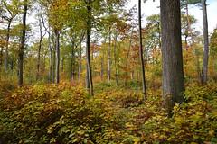C'était l'automne (Excalibur67) Tags: nikon d750 sigma globalvision art arbres trees forest foréts automne autumn paysage landscape 24105f4dgoshsma feuillage foliage