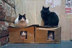 Cat Box (Mucahit Cetin) Tags: cats cat box cardboard home homeless house carton street wall stone cold