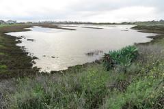 Salt pan rainy day (stonebird) Tags: ballonawetlandsecologicalreserve saltpan rainyday areab february img8657