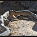 Calanques de Cassis 6  racines