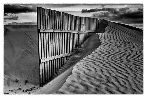 Fijando las dunas.