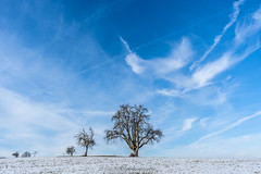 Blue Sky Trees - February 2019 IX (boettcher.photography) Tags: tree baum trees bäume schnee snow februar february winter 2019 dilsberg neckargemünd rheinneckarkreis kurpfalz badenwürttemberg deutschland germany sashahasha boettcherphotography boettcherphotos sky himmel wolken clouds natut nature naturfotografie landschaft landscape