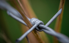 Barbed (Niaic) Tags: macro barbedwire barbwire barb wire fence keepout grass blur soft shallow depthoffield voigtlander field fields rural outdoor steel metal path fencing barrier