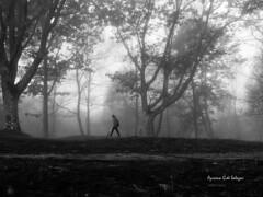 Niebla en el bosque (azucena G. De Salazar) Tags: lainoa fog niebla bosque forest basoa parquenaturalurkiola euskalherria euskadi basquecountry paisvasco