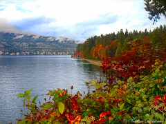 Stanley Park, Vancouver Canada (Veselina Dimitrova) Tags: sony flickr bushes trees greatphotographers clickthecamera clickcamera bestoftheday pictureoftheday photooftheday picoftheday ocean beautifulcolours nationalgeographic naturelovers naturephoto naturephotography fall autumn nature canada britishcolumbia vancouver stanleypark